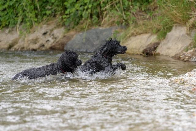 Adele und Ellis im Wasser