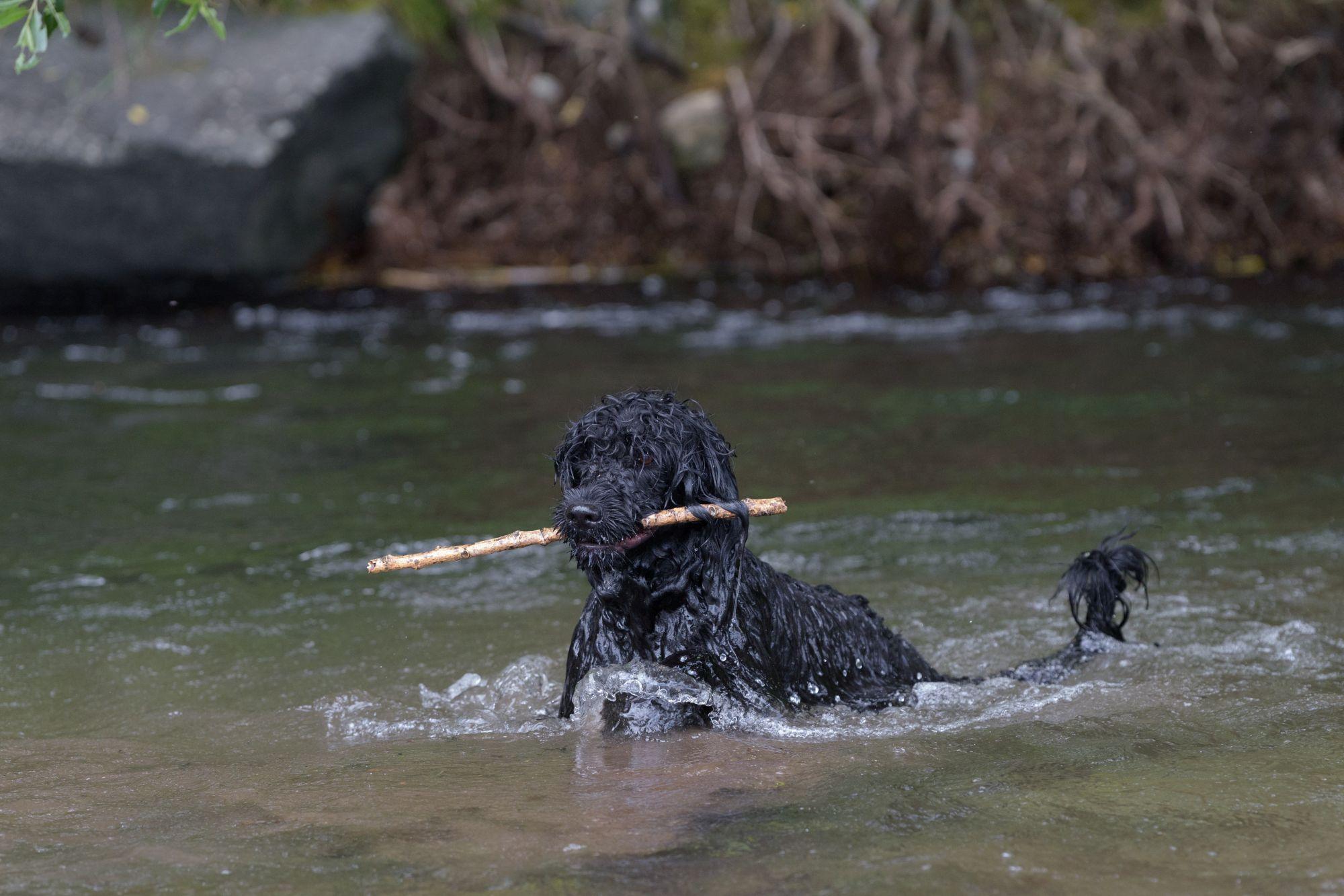 Ellis mit Stock im Wasser