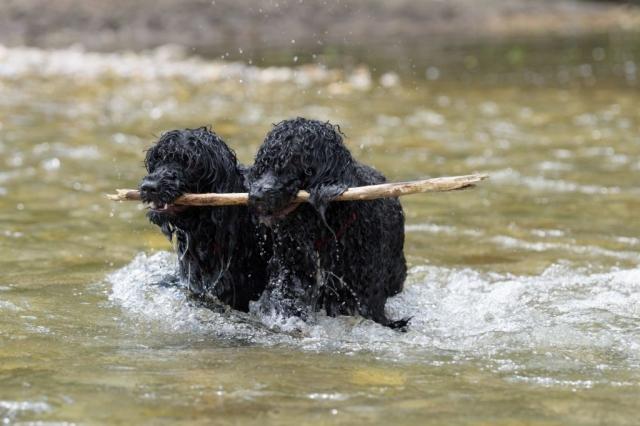 Ellis und Adele mit Stock im Wasser